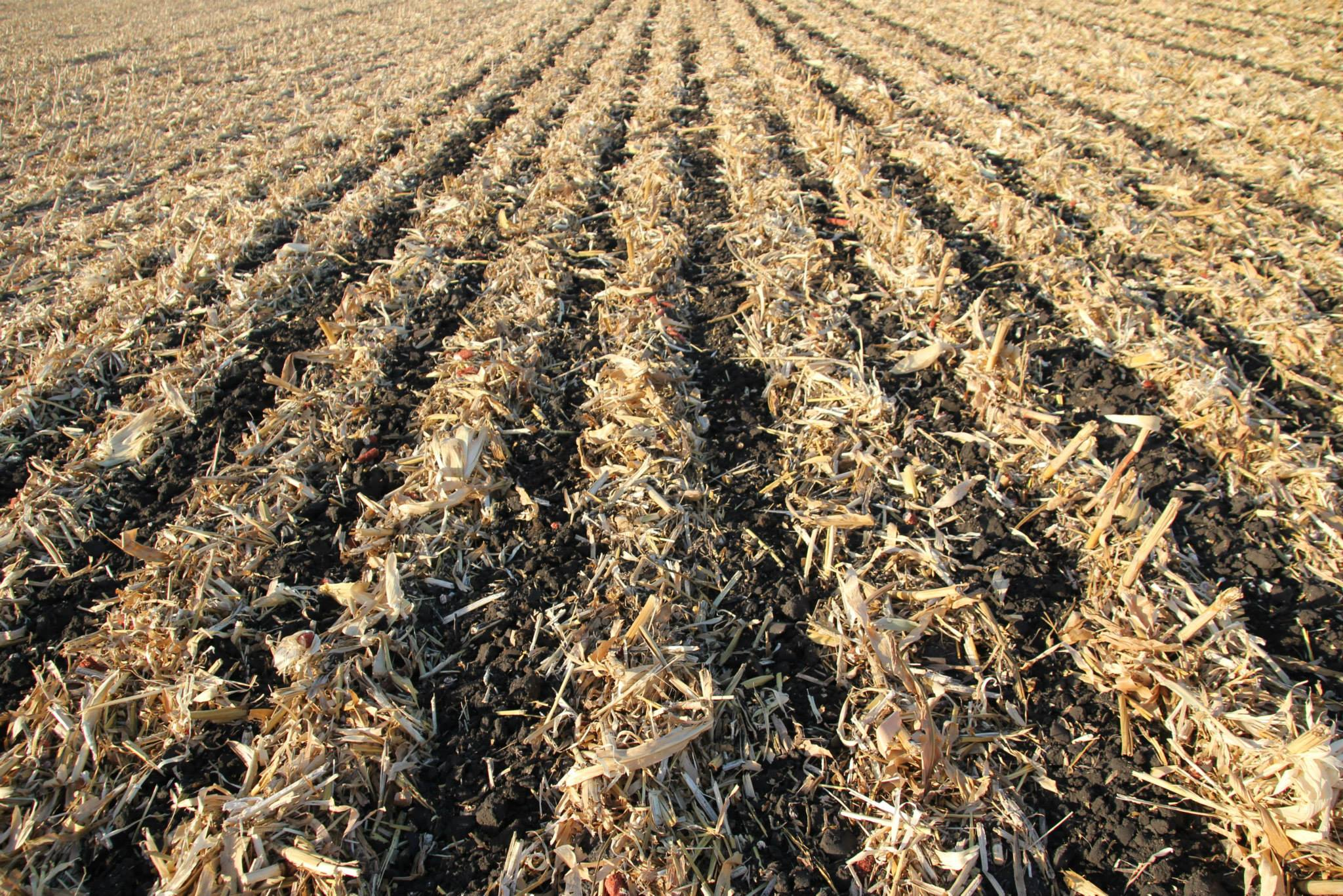Ryberg_Farm_Strip_Till_Zones.jpg